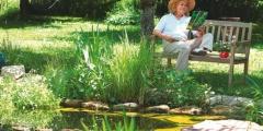 Jardin et bassin