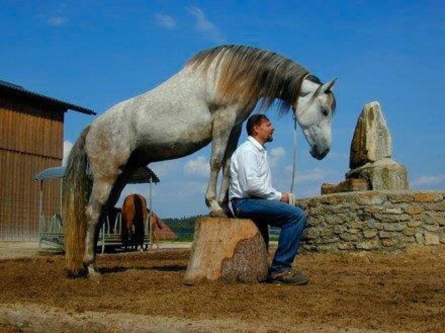 Horse Bodyforming, Waldenstein, www.horse-bodyforming.com