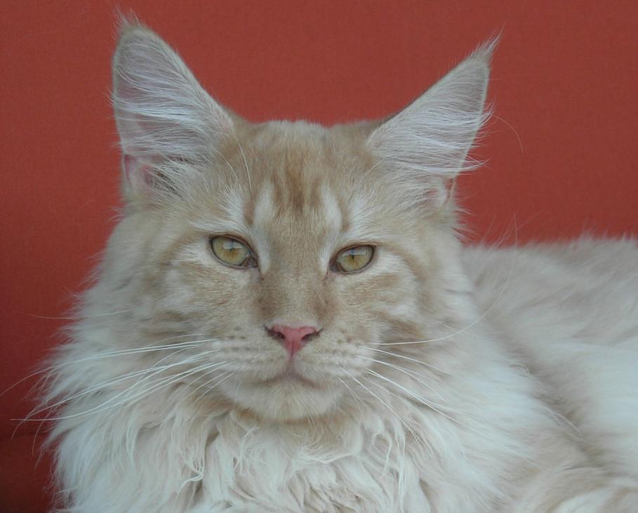 Le chat Jimmy