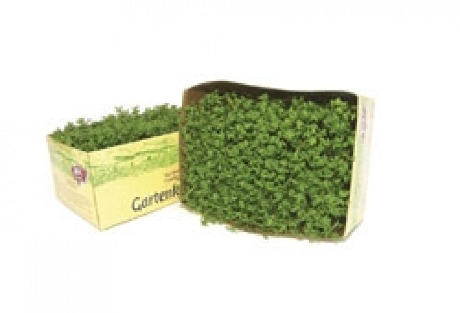 Garden Cress from Oekohof Feldinger