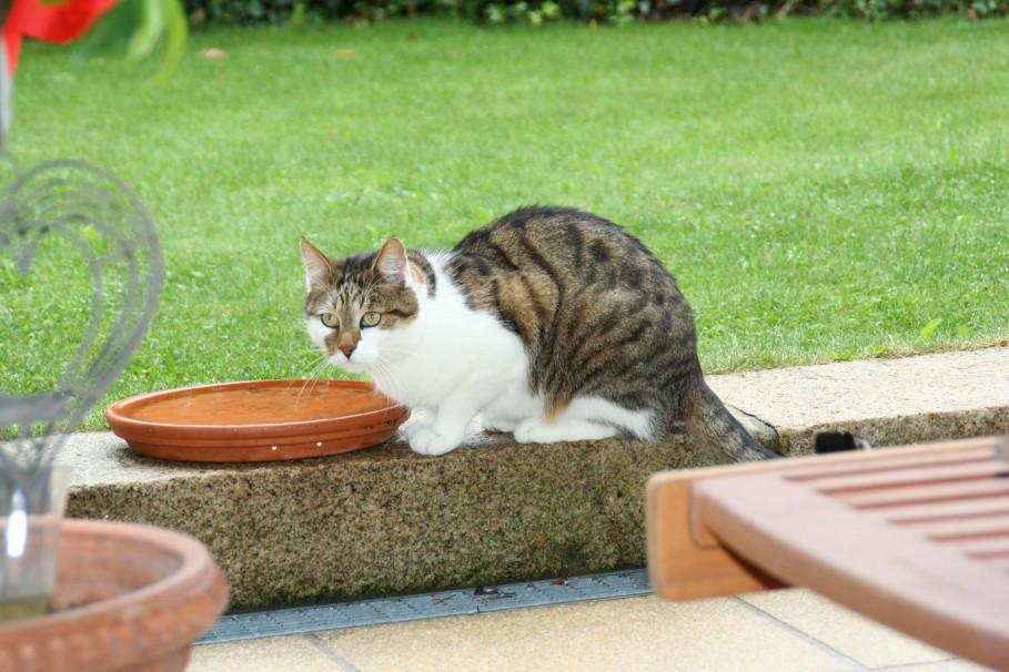 Geliebte Katze - schönes, glänzendes Fell