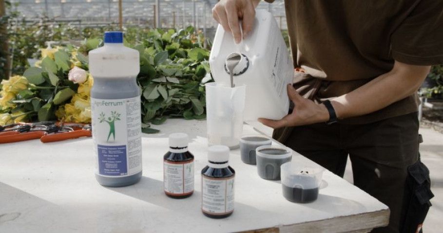 B+H Solutions: GRANDER®-Wasser lässt Pflanzen besser gedeihen