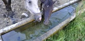 GRANDER®: Gesunde Tiere durch belebtes Wasser