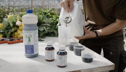 Solutions B + H: l'eau GRANDER® permet aux plantes de mieux prospérer